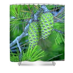 Fir Cones Shower Curtain