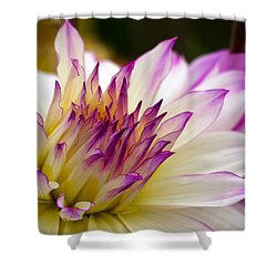 Shower Curtain featuring the photograph Fire And Ice - Dahlia by Jordan Blackstone