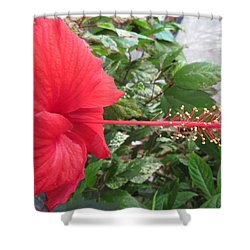 Fire And Ice Hibiscus Shower Curtain