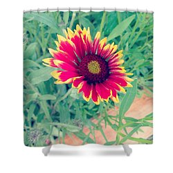 Shower Curtain featuring the photograph Fire Daisy by Thomasina Durkay