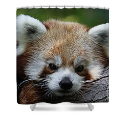 Shower Curtain featuring the photograph Fire Fox by Judy Whitton