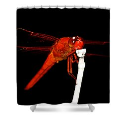 Shower Curtain featuring the photograph Fire Red Dragon by Peggy Franz