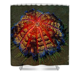 Fire Sea Urchin Shower Curtain by Sergey Lukashin