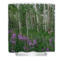 Shower Curtain featuring the photograph Fireweed And Aspen by Cascade Colors