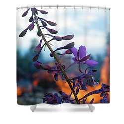 Fireweed Number Five Shower Curtain by Brian Boyle