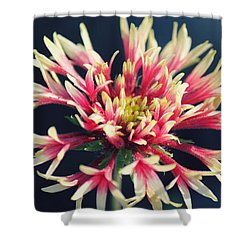 Firework Blooms Shower Curtain by Melanie Lankford Photography