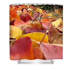Shower Curtain featuring the photograph First Day Of Fall by Andrea Anderegg