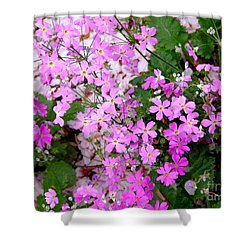 First Day Of Spring Shower Curtain by Andrea Anderegg