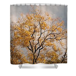 First Day Of Winter 3 Shower Curtain