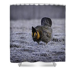 First Light 4 Shower Curtain by Thomas Young