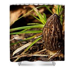 First Morel Mushroom Of Spring Shower Curtain