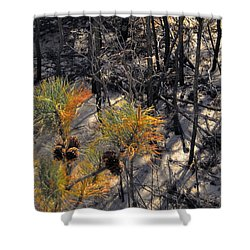First Sign Of Spring At Cape Henlopen Shower Curtain
