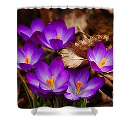 First Signs Of Spring Shower Curtain by Elaine Manley