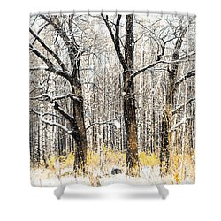 First Snow. Tree Brothers Shower Curtain by Jenny Rainbow