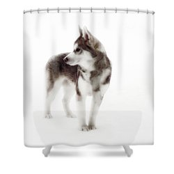 First Winter Kayla Shower Curtain