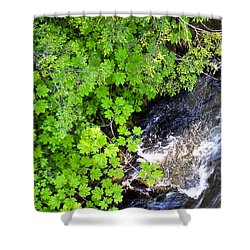 Fish Creek In Summer Shower Curtain by Cathy Mahnke