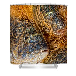 Fish On The Net Shower Curtain by Stelios Kleanthous
