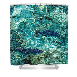 Fishes In The Clear Water. Maldives Shower Curtain by Jenny Rainbow