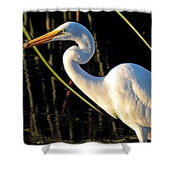 Fishing Trip Shower Curtain by Duncan Selby