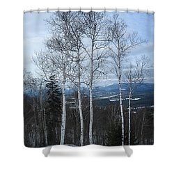 Five Birch Trees Shower Curtain