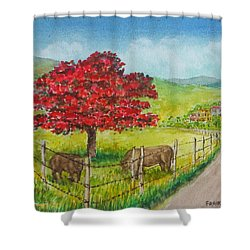 Flamboyan And Cows In Western Puerto Rico Shower Curtain