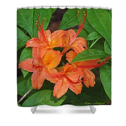 Shower Curtain featuring the photograph Flame Azalea by Chris Anderson