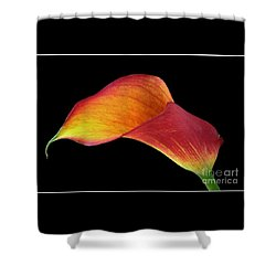 Flaming Calla Shower Curtain by Chris Anderson