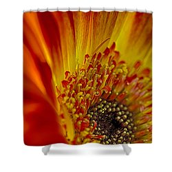 Flaming Gerbera Shower Curtain