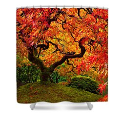 Flaming Maple Shower Curtain by Darren  White