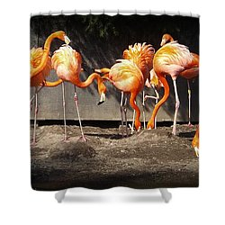 Flamingo Hangout Shower Curtain