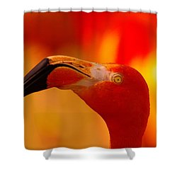 Flamingo  Shower Curtain by Jeff Swan