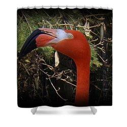 Flamingo Profile Shower Curtain by Sara  Raber