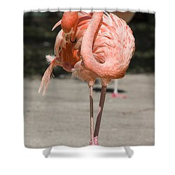 Flamingo Shower Curtain by Steven Ralser