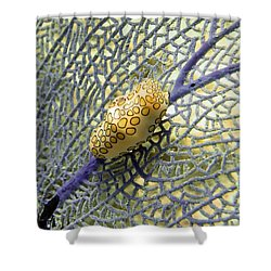 Flamingo Tongue Snail On Purple Fan Coral Shower Curtain