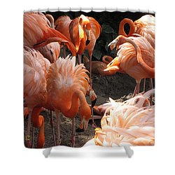 Shower Curtain featuring the photograph Flamingos by Beth Vincent