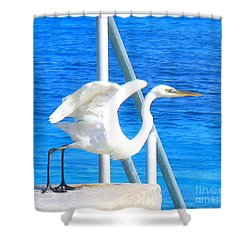 Flaps Up Shower Curtain by Patti Whitten