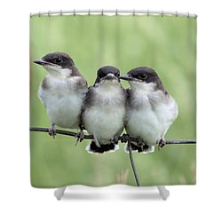 Fledged Siblings Shower Curtain by Bonfire Photography