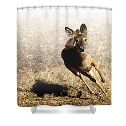 Flee Shower Curtain by Bill Stephens