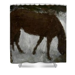 Shower Curtain featuring the painting Flicka by Bruce Nutting