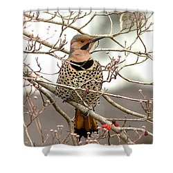 Flicker - Alabama State Bird - Attention Shower Curtain