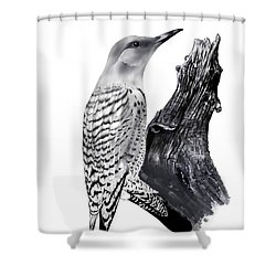 Shower Curtain featuring the drawing Flicker by Terry Frederick