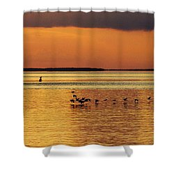 Flight At Sunset Shower Curtain