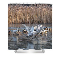 Flight From Ice Shower Curtain