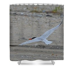 Shower Curtain featuring the photograph Flight by James Petersen