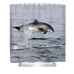 Flight Of The Dolphin Shower Curtain by Shoal Hollingsworth