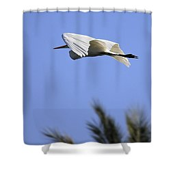 Shower Curtain featuring the photograph Flight Of The Egret by Penny Meyers