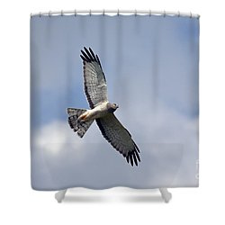 Flight Of The Harrier Shower Curtain