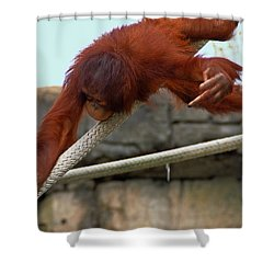 Flippin The Bird Shower Curtain by Aimee L Maher Photography and Art Visit ALMGallerydotcom
