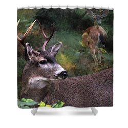 Shower Curtain featuring the photograph Flirt by I'ina Van Lawick