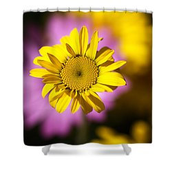 Shower Curtain featuring the photograph Floating Daisy by Joy Watson
